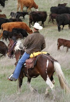 ...sometimes they go on a cattle drive
