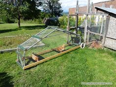 How to build a chicken tractor? For DIY Guide: http://www.usa-gardening.com/chicken-tractor/chicken-tractor.html  #chickencoop #chickens #poultry