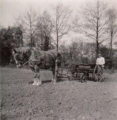 Graan zaaien met hulp van een paard, ca. 1940. (collectie Ooms) Vintage Farm, Vintage Men, Farm Photo, Picture Credit, Gentle Giant, Farming, Holland, Dutch, Gardening