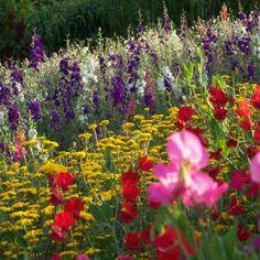 Lente in de tuin   Blog Marianne #onzesuus