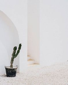 Take a look around the perfect paired back holiday home! Do you dream of a white farmhouse overlooking the sea then Masseria Moroseta in the glorious region of Ostuni is for you! The pure simplicity of the place, the whiteness everywhere, the stones, the tiles, the views, the sunshine, the turquoise sea and the perfect mix of traditional and contemporary… #holidayhome #decor #interior #white