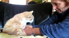 VIDEO: Clip Showing Woman Cleaning Her Senior Cat Might Be The Sweetest Video On The Internet