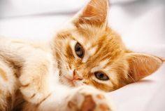 Qué hacer ante los vómitos de los gatos - Mis animales