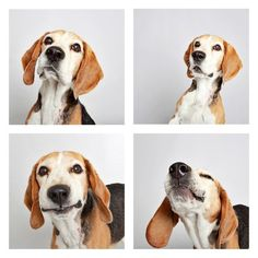 10. Harley the Beagle...  title-icon She Lets 12 Rescue Dogs Go Crazy In A Photo Booth For One Brilliant Reason. I think dogs are one of the funniest and smartest animals on our planet. This video of a dog whining because she can't open her Christmas presents, for example, never fails to make me laugh.