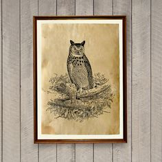Vintage home decor Owl poster Bird print AK823 by artkurka on Etsy
