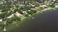 Florida's 'guacamole thick' algae is threatening its wildlife