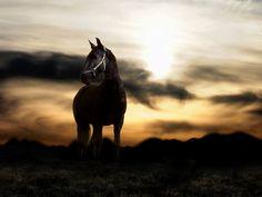 horses hd wallpapers - Buscar con Google