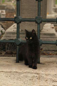 Cat in Istanbul, Turkey.