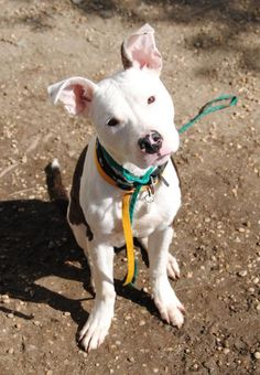 jaxon animal ida25018740 is a friendly and affectionate guy who is easy