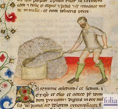 """Dal codice """"Historia Plantarum"""", fine XIV secolo"""