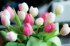 White And Pink Tulips pink flowers floral white tulips White Tulips, Pink Tulips, Tulips Flowers, Fresh Flowers, Beautiful Flowers, Beautiful Things, Happy Flowers, Beautiful Beautiful, My Flower