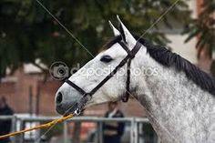 Αποτέλεσμα εικόνας για αλογα ισπανικα
