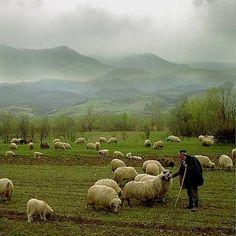 the shepherd loves his sheep . photo by Florianna Barbu The Farm, Sheep And Lamb, The Good Shepherd, All Nature, Mundo Animal, Tier Fotos, English Countryside, Farm Life, Country Life