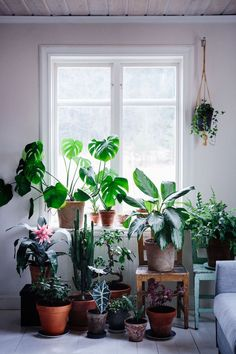 When it comes to spider plant care, less is often more. In fact, you don't need much of a green thumb to successfully grow spider plants indoors. Home And Garden, Green, Types Of Plants, Bright Rooms, Cool Plants, Gardening For Beginners, Plastic Nursery Pots, Indoor, Indoor Plants