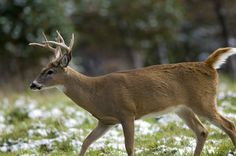 Michigan Deer Management Group Responds to Column on Antler Proposals on http://www.deeranddeerhunting.com