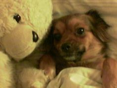 With her teddy bear, she feels protected! (Con su osito se siente protegida)