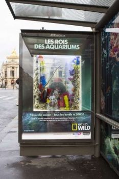 """Les rois des aquariums"" / ""Kings of aquariums"" in Paris"