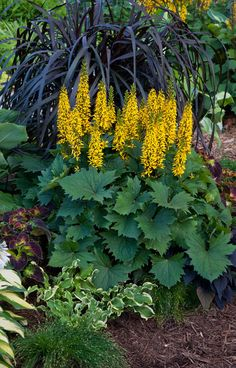 Perennials That Thrive in Shade | Proven Winners.
