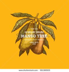 Find Mango Tree Vintage Design Template Botanical stock images in HD and millions of other royalty-free stock photos, illustrations and vectors in the Shutterstock collection. Mango Fruit, Mango Tree, Fruit Illustration, Botanical Illustration, Cute Fruit, Nymph, Vintage Designs, Africa