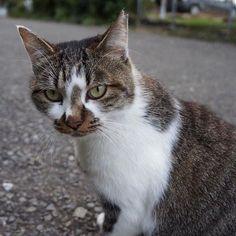 【neco_sanpo】さんのInstagramをピンしています。 《♡今日の猫ちゃん♡ 𓃠 𓃠 #猫 #ねこ部 #ねこスタグラム #neko #cat #cats #catstagram #nekostagram #にゃんすたぐらむ #ネコ #ネコ部 #ノラ猫 #野良猫 #catslovers #ねこ #にゃんこ #さんぽ #散歩 #公園 #海 #山 #秋 #nekolove #catlovers #catsofinstagram #catlife #catwalk》