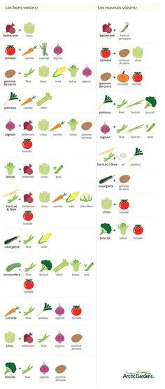 voisins_légumes
