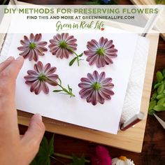 DIY Methods for Preserving Leaves and Flowers - Green in Real Life How To Preserve Flowers, Preserving Flowers, Leaf Flowers, Dried Flowers, Leaf Pressing, Spray Roses, Garden Crafts, Floral Crown, Cute Crafts