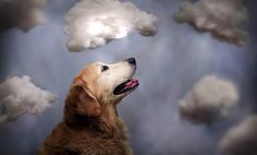 O cão mais feliz do mundo | Criatives | Blog Design, Inspirações, Tutoriais, Web Design