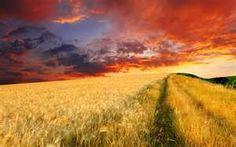Endless wheat fields at dusk     best-wallpaper.net