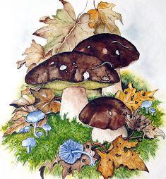 """Steinpilze """"Boletus edulis"""" Watercolour www.aquarelle-inhoven.de"""