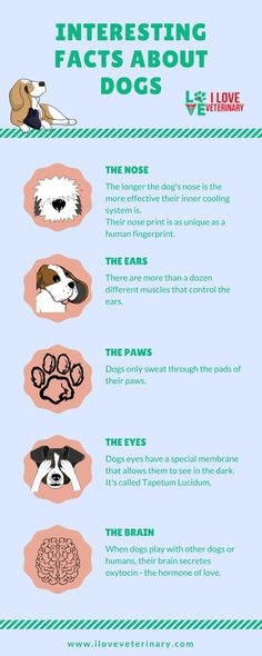 Dog Training Tips dogs infographic - Dogs are amazing, we all agree to that! Here are some amazing facts about them that maybe you didn't know till now :) Fun Facts About Dogs, Dog Information, Dog Nose, Pet Care Tips, Old Dogs, Dog Training Tips, Brain Training, Pet Health, Collie