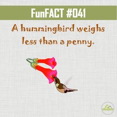 #DYK that a hummingbird weighs less than a penny. #funfacts
