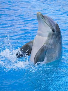 You see dolphins all the time in the water aquariums and all over the gulf of mexico
