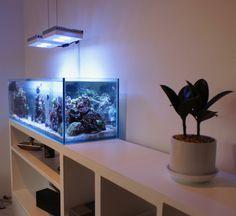 Saltwater Fish Tanks, Saltwater Aquarium, Marine Aquarium, Reef Aquarium, Crystal Room Decor, Fish Tank Design, Amazing Aquariums, Apartment Walls, Led Aquarium Lighting