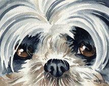 SHIH TZU Dog Art Print Signed by Artist DJ Rogers