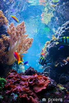 Underwater scene with fish, coral reef Self-Adhesive Wall Mural - Coral reefYou can find Coral reefs and more on our website.Underwater scene with fis. Ocean Underwater, Underwater Animals, Underwater Photos, Underwater Painting, Underwater Photography, Nature Photography, Photography Couples, Film Photography, People Photography