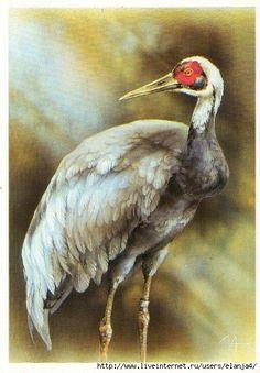 Birds, Postcards, Animals, Animales, Animaux, Bird, Animal, Animais, Greeting Card