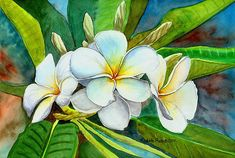 Hawaiian Art, Hawaiian Islands, Google Images, Flow, Plant Leaves, Scenery, Watercolor, Pure Products, My Favorite Things