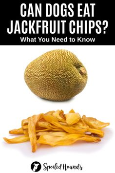 Can dogs eat jackfruit chips? Keep your dog safe and find out what you need to know about dogs eating jackfruit chips. How To Cook Jackfruit, Jackfruit Seeds, Vegan Pulled Pork, How Much Sugar, Dog Nutrition, Curry Dishes, Can Dogs Eat, New Fruit, Best Dog Food