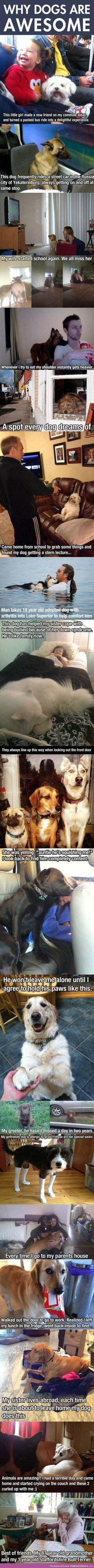 "These are so sweet & funny! ""Dogs are better than people"""