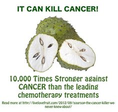 The Sour Sop or the fruit from the Graviola tree is a miraculous natural cancer cell killer 10,000 times stronger than Chemo.** Why are we not aware of this?* *Its because some big corporation want to make back their money spent on years of research by trying to make a synthetic version of it for sale.*