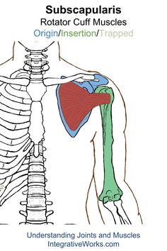 Understanding Trigger Points - Pain in back of shoulder when lifting arm and throwing
