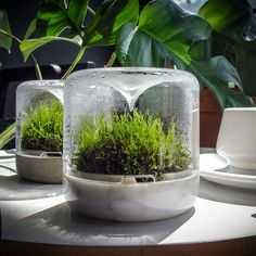 Botanica Boutique Sanctuary - Lux in Carrara Marble Types Of Moss, Zen, Moss Garden, Self Watering Planter, Nature Aesthetic, How To Grow Taller, Carrara Marble, Lush Green, Snails