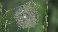 1920x1080px spider web wallpaper hd pack by Hebron Jacobson