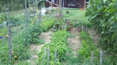 weeded area