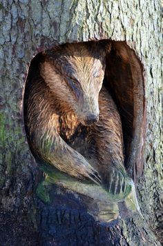 Chainsaw carved Badger at Thornley Woods,