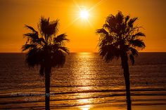 Two Palm Trees at Sunset  Framed Fine Art by ArtWagerPhotos