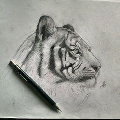 Tiger by JonathanL96