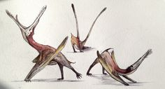 Yawning dragon, downward facing dinosaur, twerking birb Three important stretches for the active pterosaur Jurassic Park, Jurassic World, Dinosaur Sketch, Dinosaur Art, Shadow Dragon, Extinct Animals, Happy Tree Friends, Prehistoric Creatures, Cryptozoology