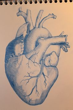 Realistic heart realized with blue pencil. 4 hours to make it