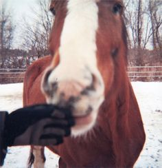 There is nothing like the feeling of a horses' nose! hands down